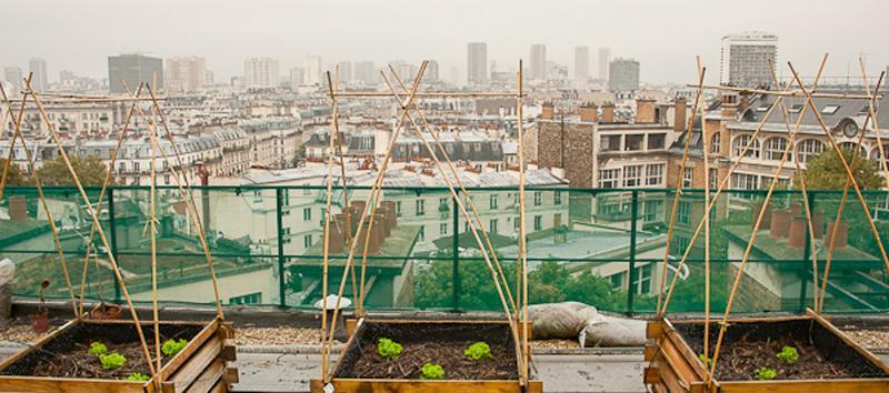 Le potager sur le toit Agroparistech © Mairie de Paris | François Grunberg